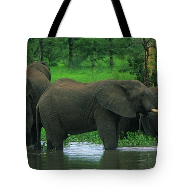 Elephant Shower Tote Bag