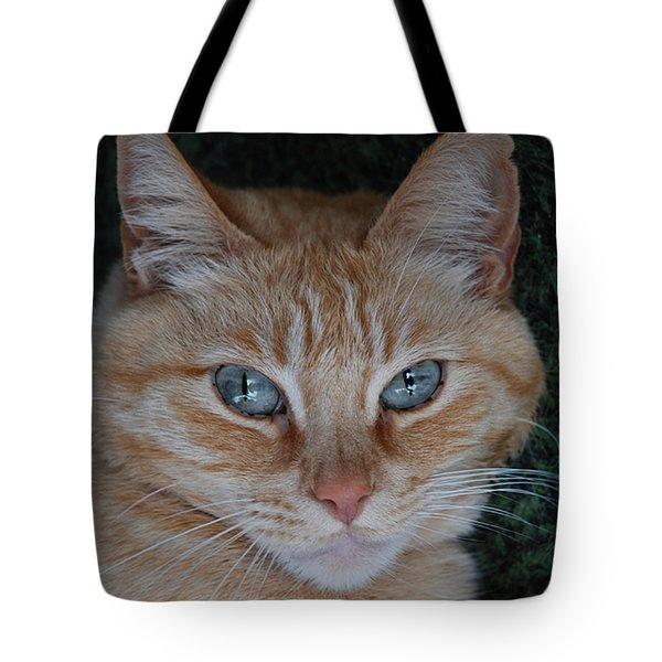 Fat Cats Of Ballard 5 Tote Bag