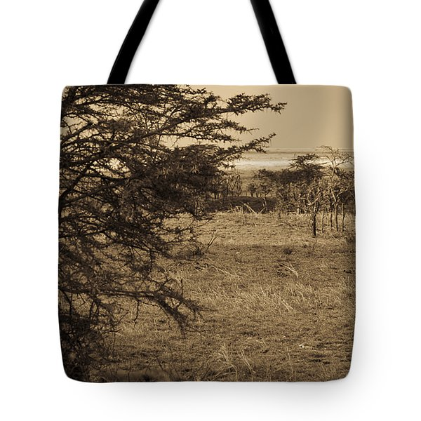 Male Lions Snoozing In Shade Tote Bag by Darcy Michaelchuk
