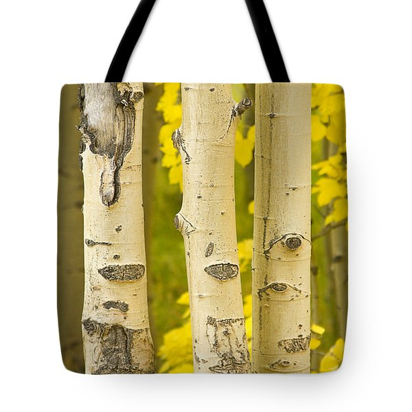 Three Autumn Aspens Tote Bag by James BO  Insogna