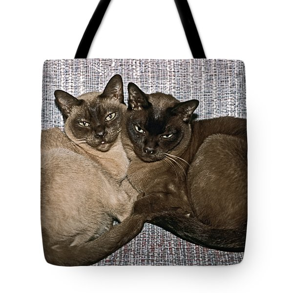 Tonkinese Pals Tote Bag by Sally Weigand