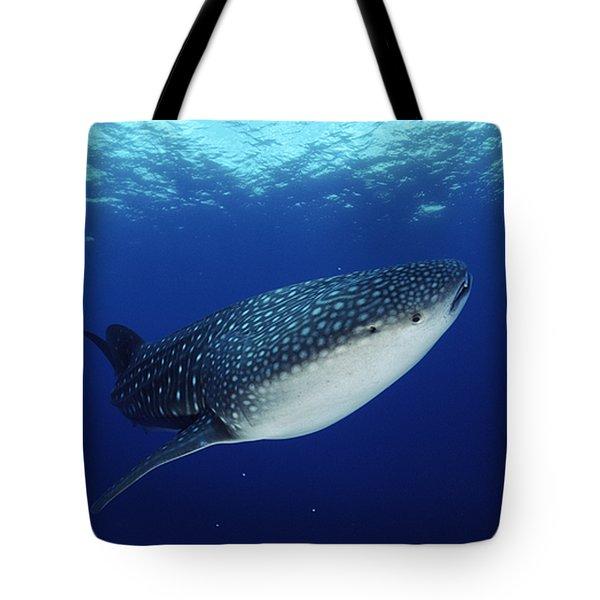 Whale Shark Rhincodon Typus Tote Bag by Jurgen Freund