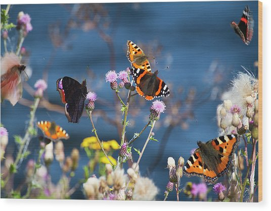 Butterflies Sitting On Flower Wood Print by www.WM ArtPhoto.se