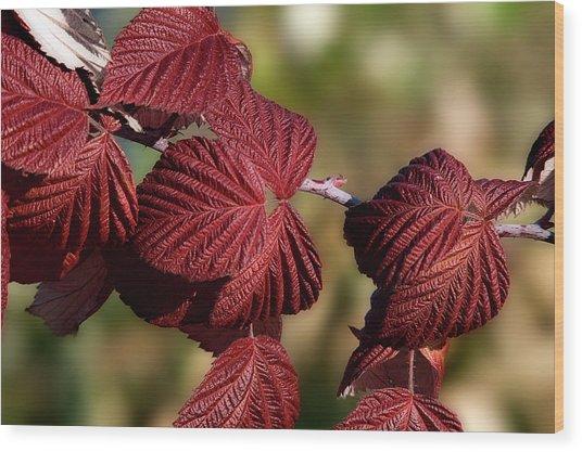 Crimson Red Leaves Wood Print