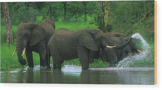 Elephant Shower Wood Print