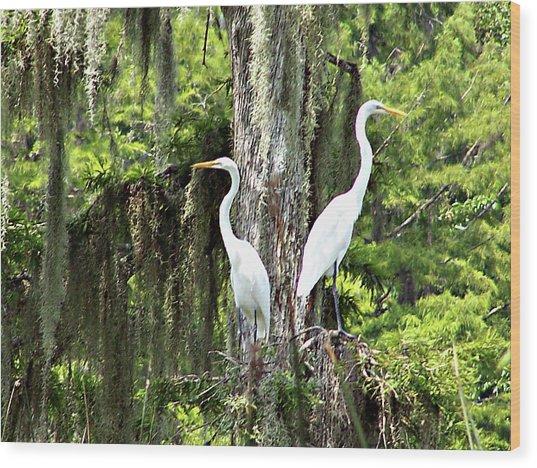 Great White Egrets Wood Print
