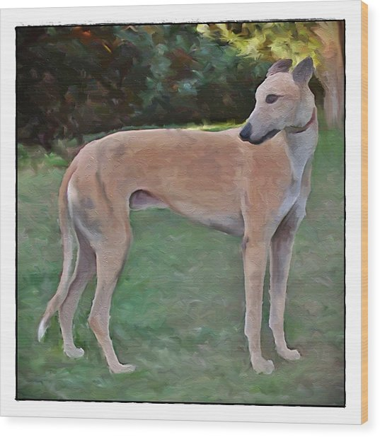 Greyhound Standing Rendered 103 Wood Print by Terry Mulligan