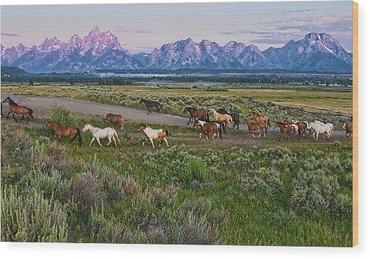 Horses Walk Wood Print