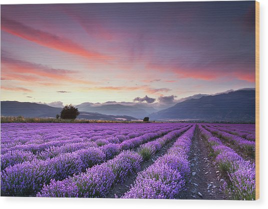 Lavender Field Wood Print by Evgeni Dinev Photography