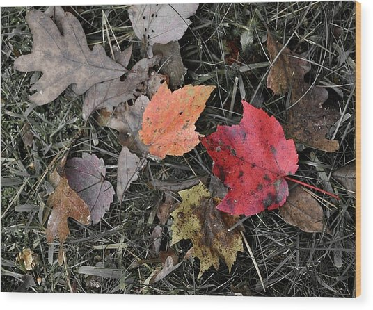 Leaves Are Falling Wood Print by JAMART Photography