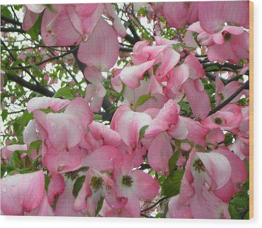 Magnolias Wood Print by Heather Weikel