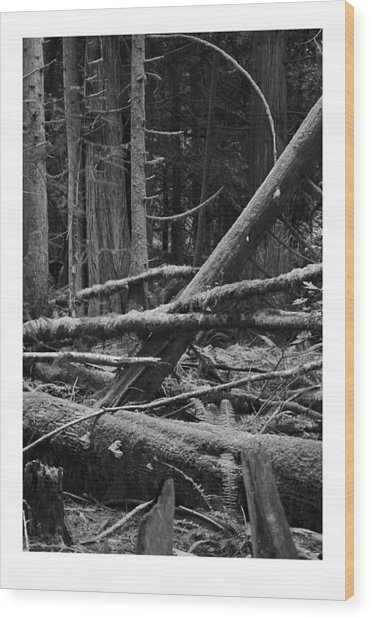 Natural Forest Wood Print by J D Banks