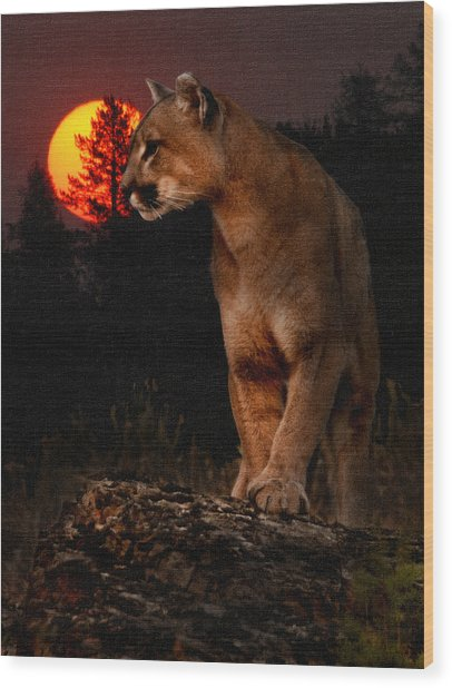Night Of The Cougar Wood Print