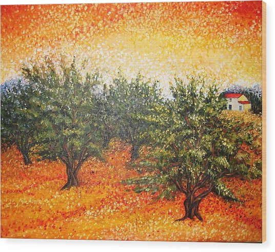 Olive Field In The Sunset Wood Print