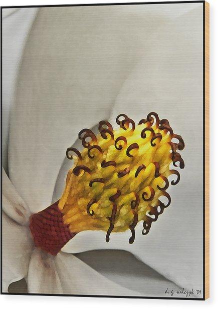 Painted Magnolia Wood Print by Daniel G Walczyk