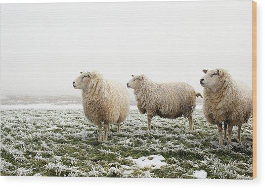 Three Sheep In Winter Wood Print