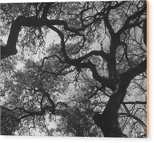 Tree Gazing Wood Print by Lindsey Orlando
