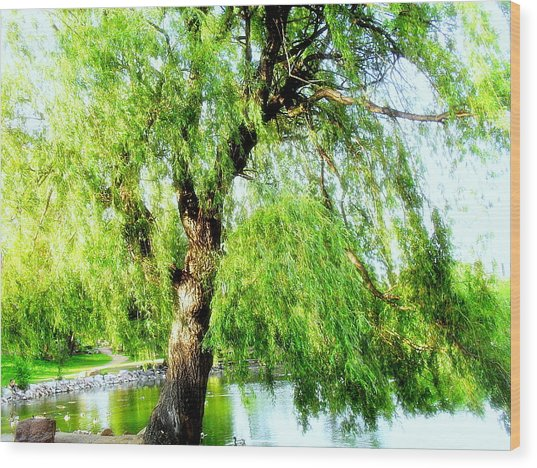 Willow Over Pond Wood Print