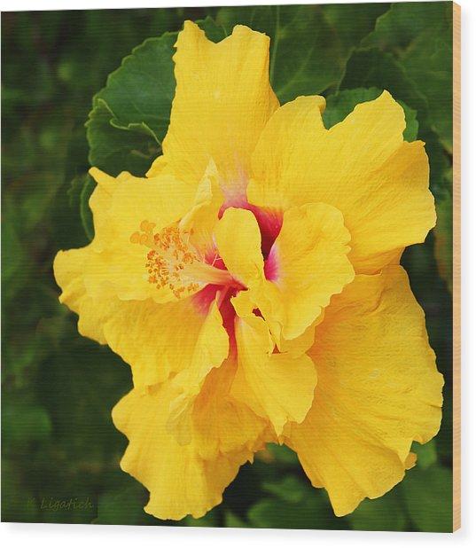 Yellow Double Hibiscus Wood Print