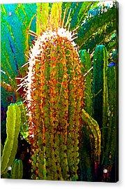 Backlit Cactus Acrylic Print by Amy Vangsgard