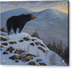 Last Look Black Bear Acrylic Print by Frank Wilson