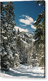 Fresh Powder Acrylic Print