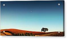 Vineyard Sky Panorama Acrylic Print by Larry Gerbrandt