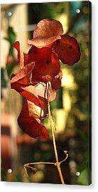 Beauty Of Nature Acrylic Print by Ankit Changawala