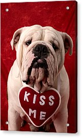 English Bulldog Acrylic Print by Garry Gay