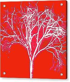 Imagination Tree Acrylic Print by James Mancini Heath