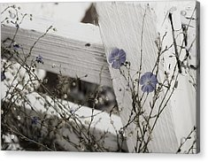 Against The Fence Acrylic Print by Rebecca Cozart