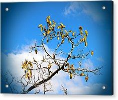 Acrylic Print featuring the photograph Autumn's Here by Milena Ilieva