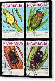 Beetles Stamps Collection. Acrylic Print by Fernando Barozza