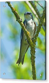 Acrylic Print featuring the photograph Bird In Tree by Rod Wiens