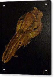 Boar's Skull No. 3 Acrylic Print