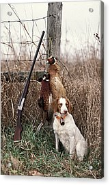 Brittany And Pheasants - Fs000757b Acrylic Print