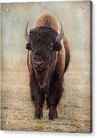 Buffalo Bull Acrylic Print
