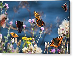 Butterflies Sitting On Flower Acrylic Print by www.WM ArtPhoto.se