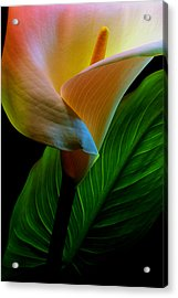 Calla Lily Acrylic Print by Dung Ma