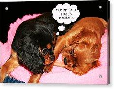Cavalier King Charles Spaniel Let's Share Acrylic Print by Daphne Sampson