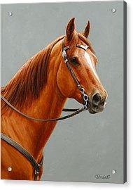 Chestnut Dun Horse Painting Acrylic Print