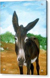 Chimayo Mule Acrylic Print