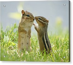 Chipmunks In Grasses Acrylic Print