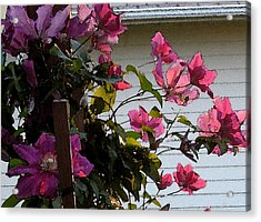 Acrylic Print featuring the painting Clematis by Susan Fisher