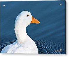 Acrylic Print featuring the photograph Come Swim With Me by Edward Peterson
