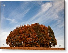 Compact Forest Acrylic Print by Evgeni Dinev