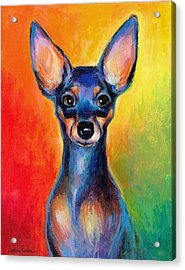 Contemporary Colorful Chihuahua Chiuaua Painting Acrylic Print by Svetlana Novikova