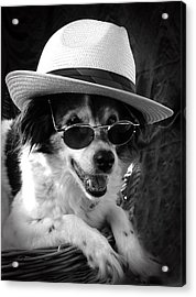Cool Dog  Acrylic Print