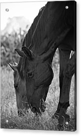 Das Pferde Acrylic Print by Edward Myers