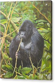 Deep In Virunga Jungle Acrylic Print